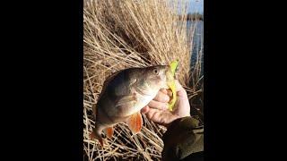 Рыбалка весной на спиннинг 2021 в половодье Попал на Жор окуня Отличная рыбалка Красивая природа