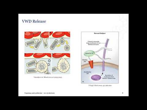 Laboratory Diagnosis of von Willebrand Disease (VWD)