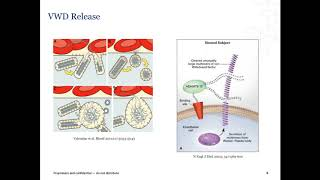 Laboratory Diagnosis of von Willebrand Disease (VWD)