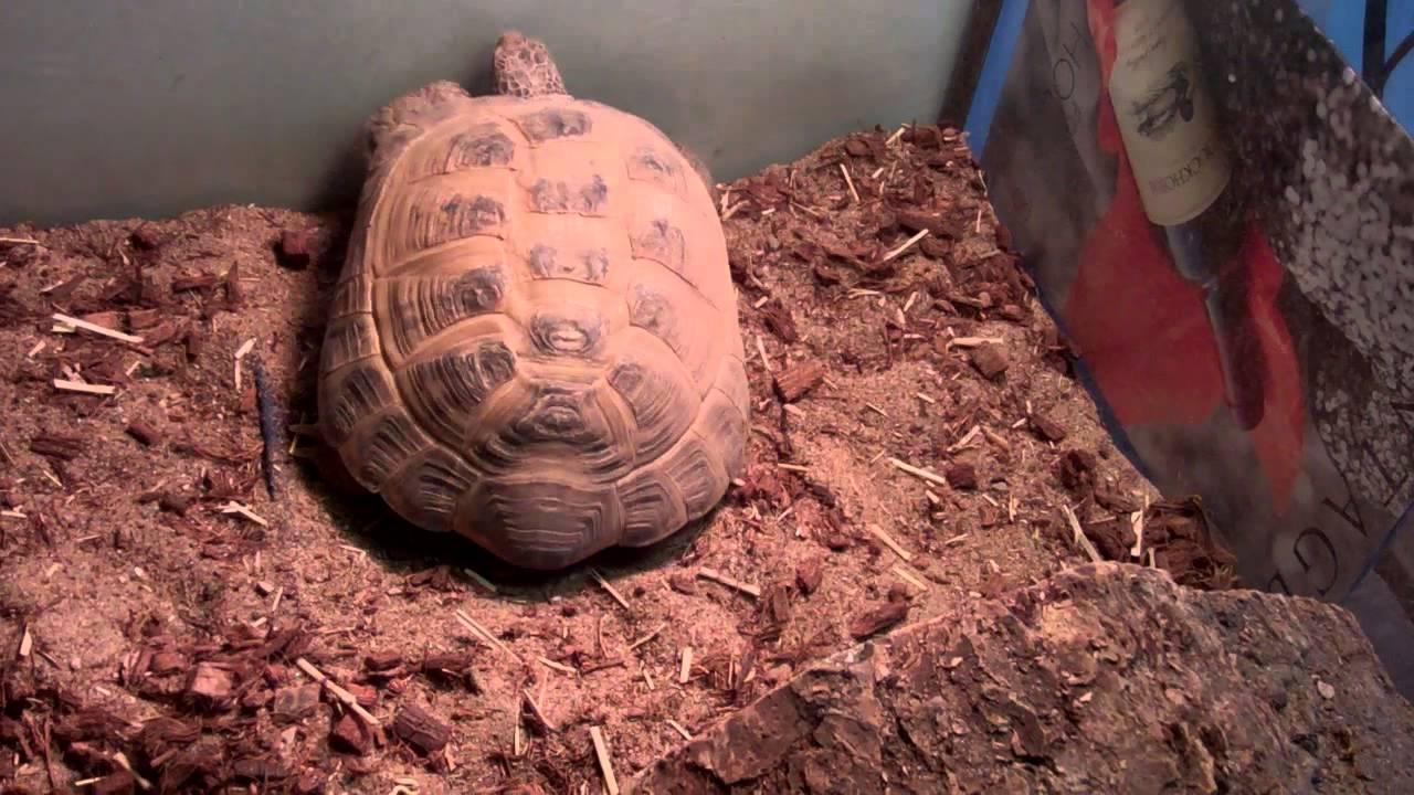 Tortoise Enclosure Heating Youtube