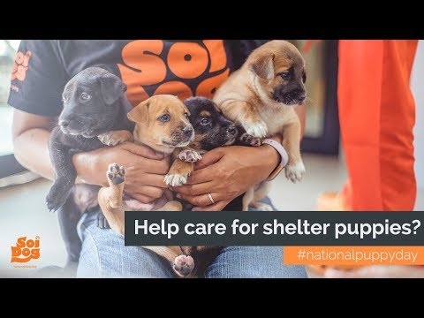Help care for shelter puppies? national puppy day 2018