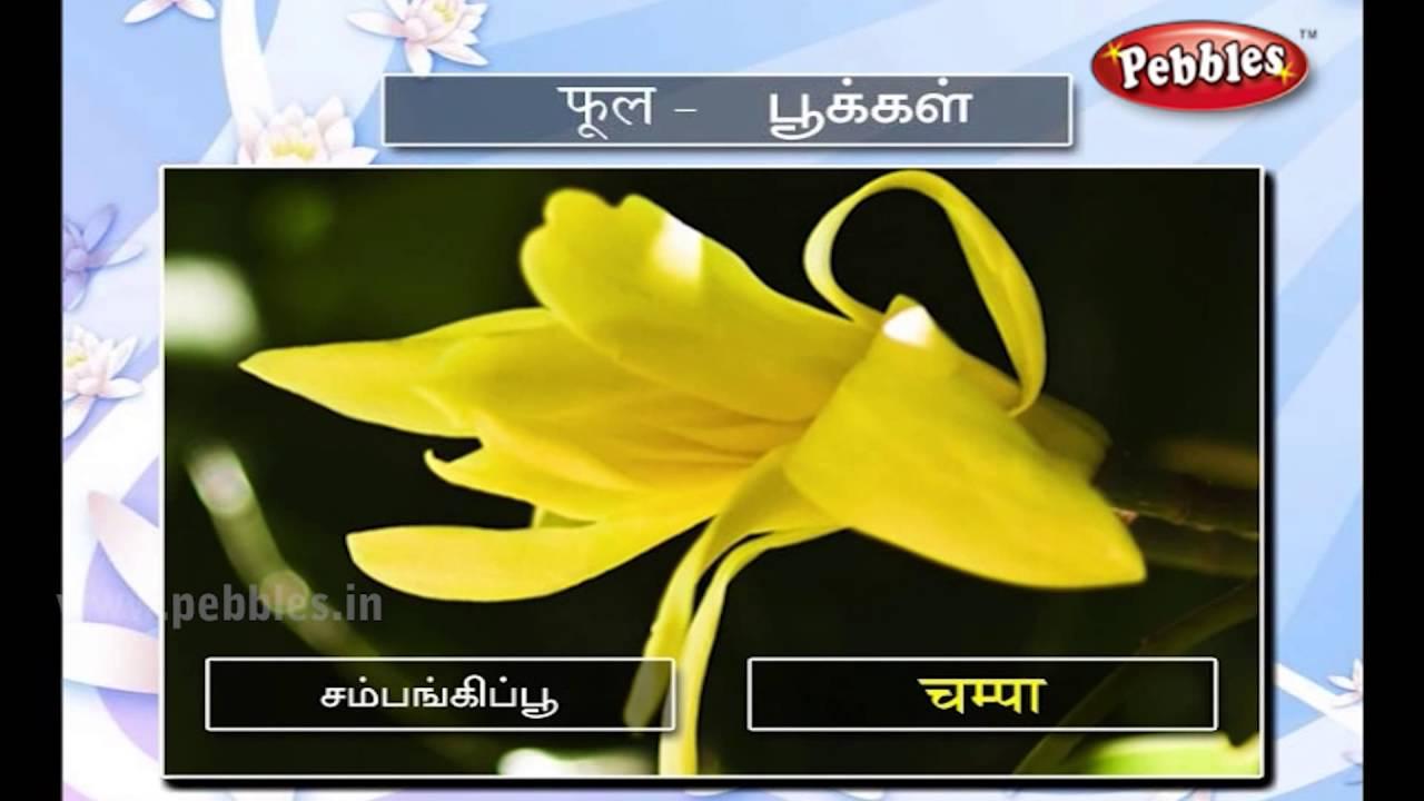 Speak hindi through tamil spoken hindi lesson 15 flowers youtube speak hindi through tamil spoken hindi lesson 15 flowers izmirmasajfo
