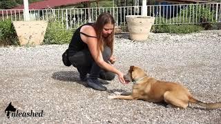 כיצד ללמד את הכלב ארצה