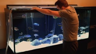 How I Maintain My Fishroom