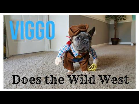 French Bulldog puppy dressed like a cowboy