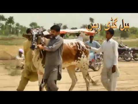 آل پاکستان فراری گروپ بیل گڈی ریس 16/05/2018