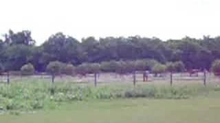 Horses Farm Austria 3