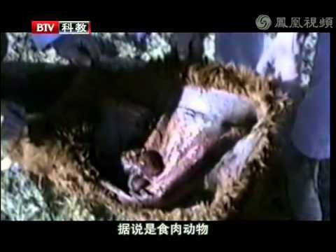揭秘外星人实验: 外星人专吃动物大脑内脏!