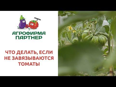 Вопрос: Почему помидоры цветут, но не завязываются Что делать?