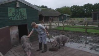 John is varkensboer bij de boerderij van de Binckhorst in Rosmalen - Cello