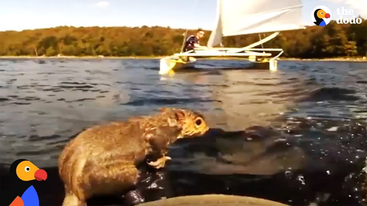 Sailors Rescue Squirrel In Middle Of A Lake | The Dodo