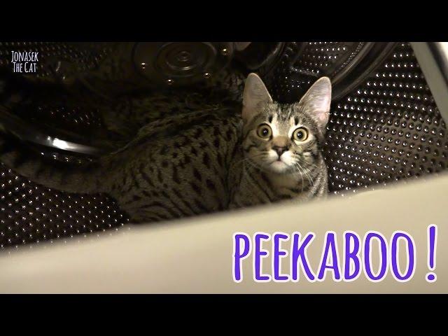 Kitten peekaboo in a washer