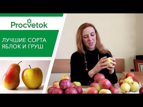 Какие сорта яблонь и груш посадить? Обзор сортов для Средней полосы