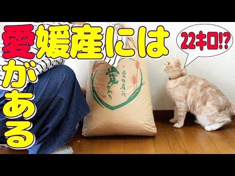猫砂ホワイトペレット22キロをママに内緒で買ったら・・・