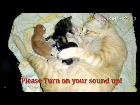Little kittens real cry out. #cat #kitten #newborn