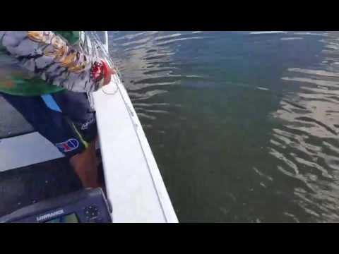 Castnetting Prawns Pine River