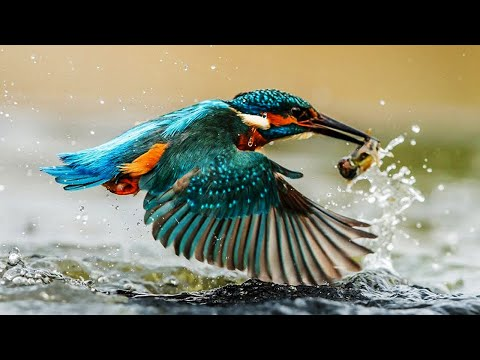 10 Most Beautiful Kingfishers In The World