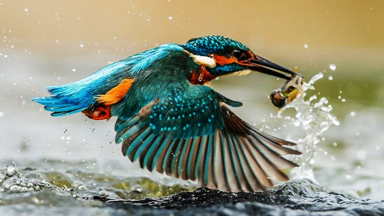 10 Most Beautiful Kingfishers In The World Youtube