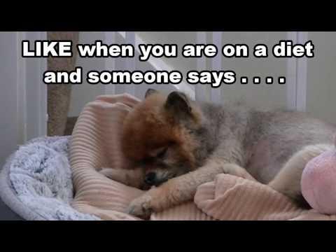 The Best Pomeranian Video Ever 'Cilla The Pom Loves CAKE'