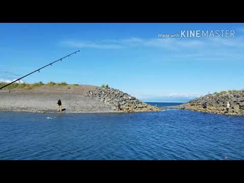 Homer Fishing Hole - What Is Combat Fishing? Catching Silver Salmon- Alaska