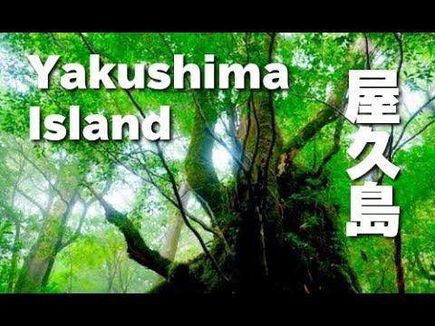 World Heritage 屋久島 世界遺産の森と水の島 屋久島観光 Yakushima Island Discover Nippon 白谷雲水峡