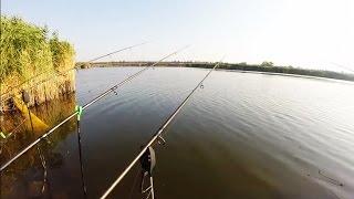 Ловля рыбы на ставке.Рыбалка.Fishing