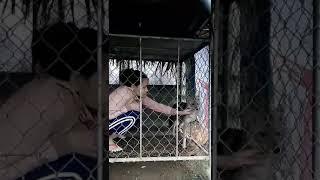 Thế giới động vật: những loài chó quý hiếm VN(12)