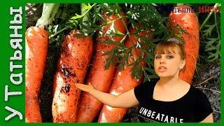 видео Как вырастить крупную и сладкую морковь?