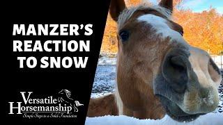 MANZER'S REACTION TO SNOW // Versatile Horsemanship