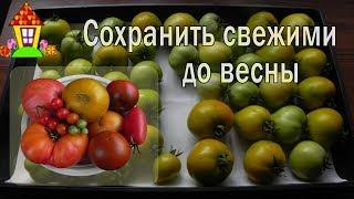 Хранение помидоров. Как сохранить помидоры свежими на зиму