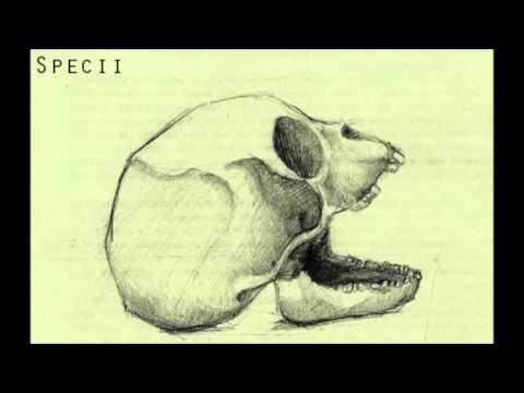 Kazi Ploae si Specii - Indepartare (Instrumental)