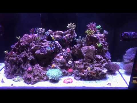 Red Sea Reefer 250 Update #5: Coral Colors 4K