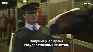 Забавные лошадки .Funny animals.Humor. Tricks.