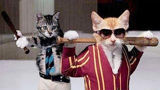 NEW КОТЫ - Смешные кошки 2019 ★ Битва между кошками и животными