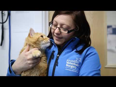 Meet the Staff at Knutsford Vets in Cheshire