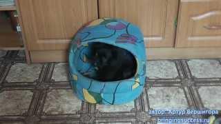 черный пекинес щенок прикольно играет с желудем Black Pekingese puppy fun playing with acorn