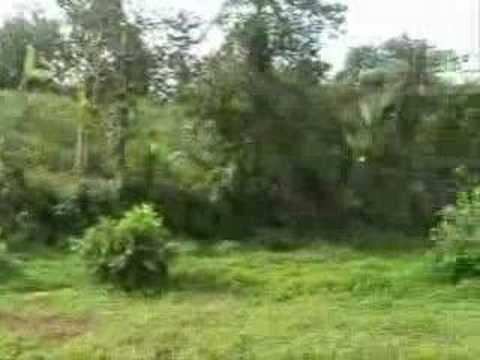 Bali Property | Bali land sale | Bali Real Estate