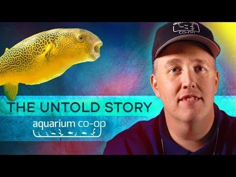 The Untold Story Of AQUARIUM CO-OP