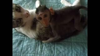 子猿はミリちゃんを母親のように慕い、決して離そうとしません。