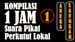 Video 1 JAM - Kompilasi Suara Pikat Perkutut Lokal (Edisi 1) download MP3, 3GP, MP4, WEBM, AVI, FLV Agustus 2019