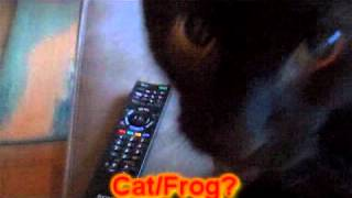 My cat sounds like the frog/cat Thumbnail