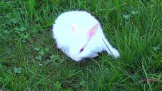 Прикольный белый зайчик с красными глазами