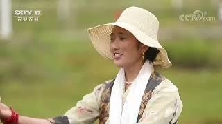 《中国三农报道》 20201031|CCTV农业 - YouTube