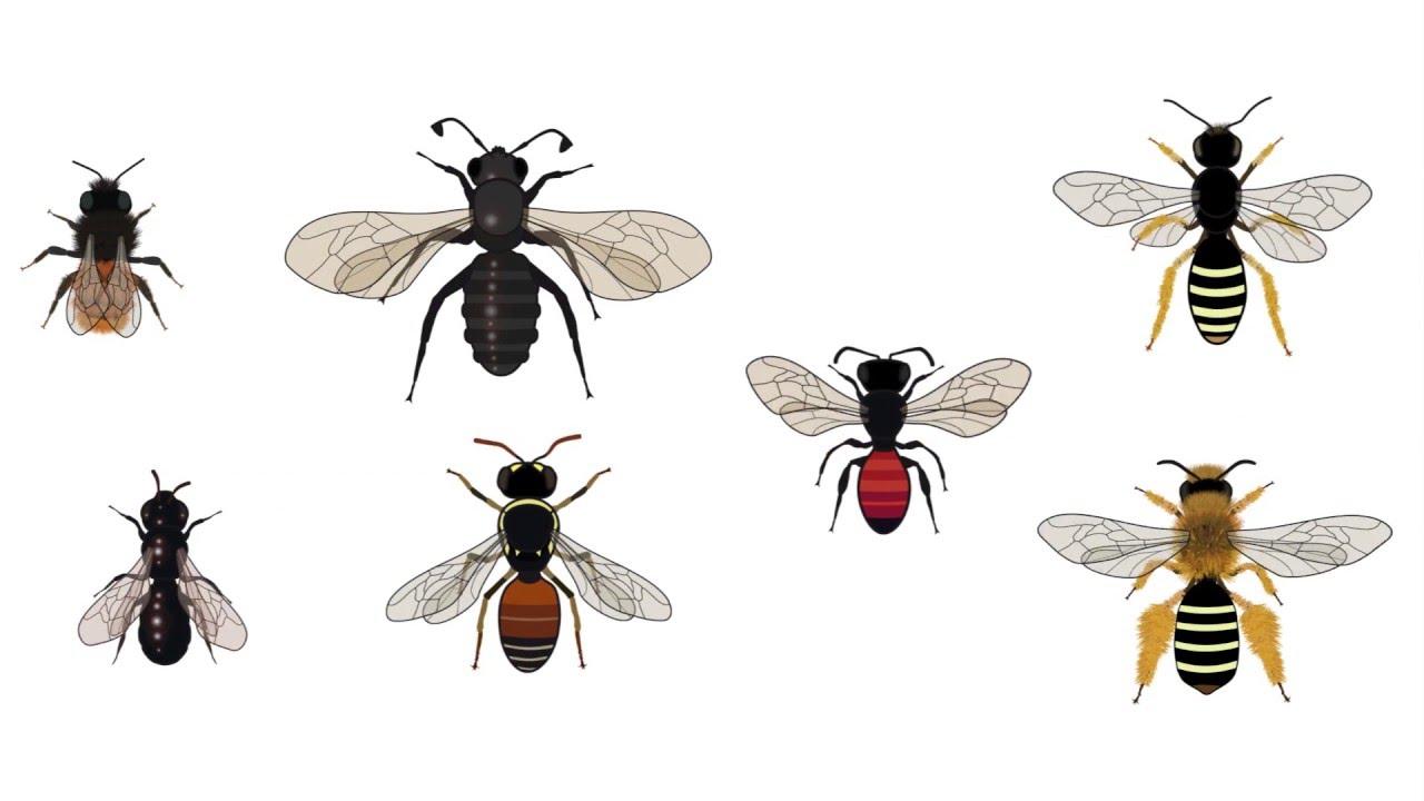 La necedad del ser humano y el declive de las abejas