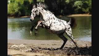 Красивые картинки лошадей.🐴🐴🐴
