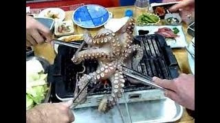 Eating Live Octopus---Cooking Live Octopus in Korea----Would You Eat a Live Octopus?