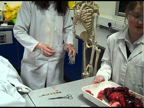 Autopsie Youtube