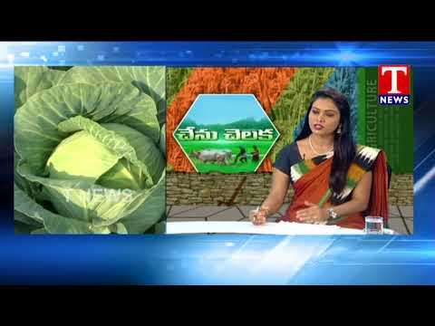 BMK Sharma About Organic Farming and Chemical Farming | Chenu Chelaka | TNews