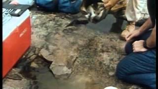 Жак Ив Кусто серия 5.2 Золотая река.avi
