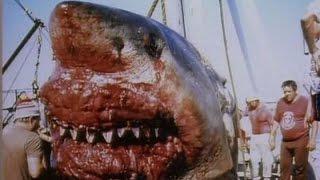 видео Факти про акул